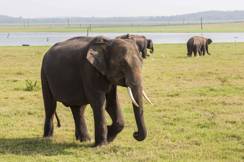 Noen elefanter hadde støttenner.